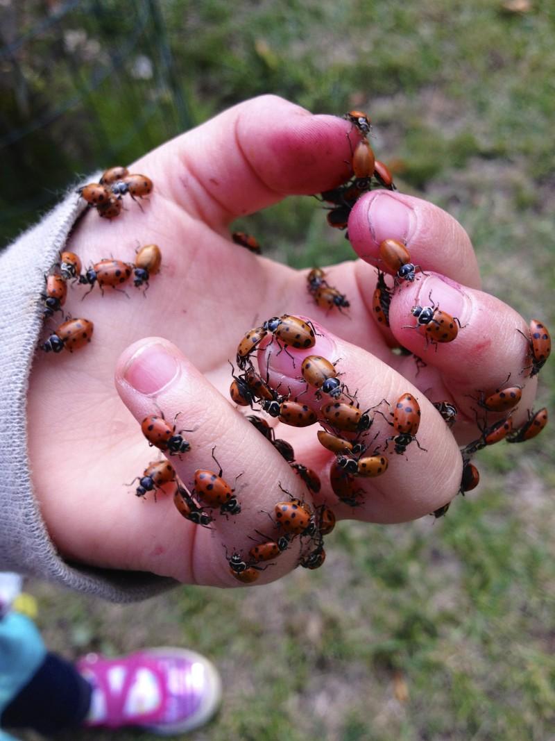 Ladybugs!