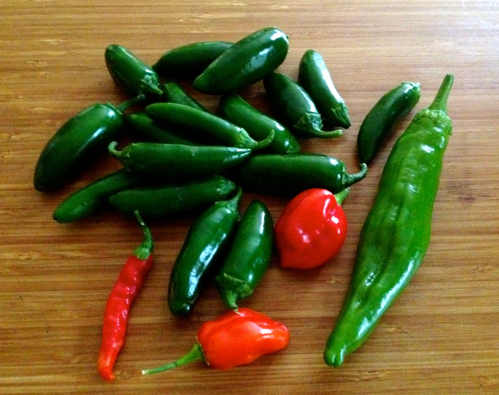 chile peppers for salsa