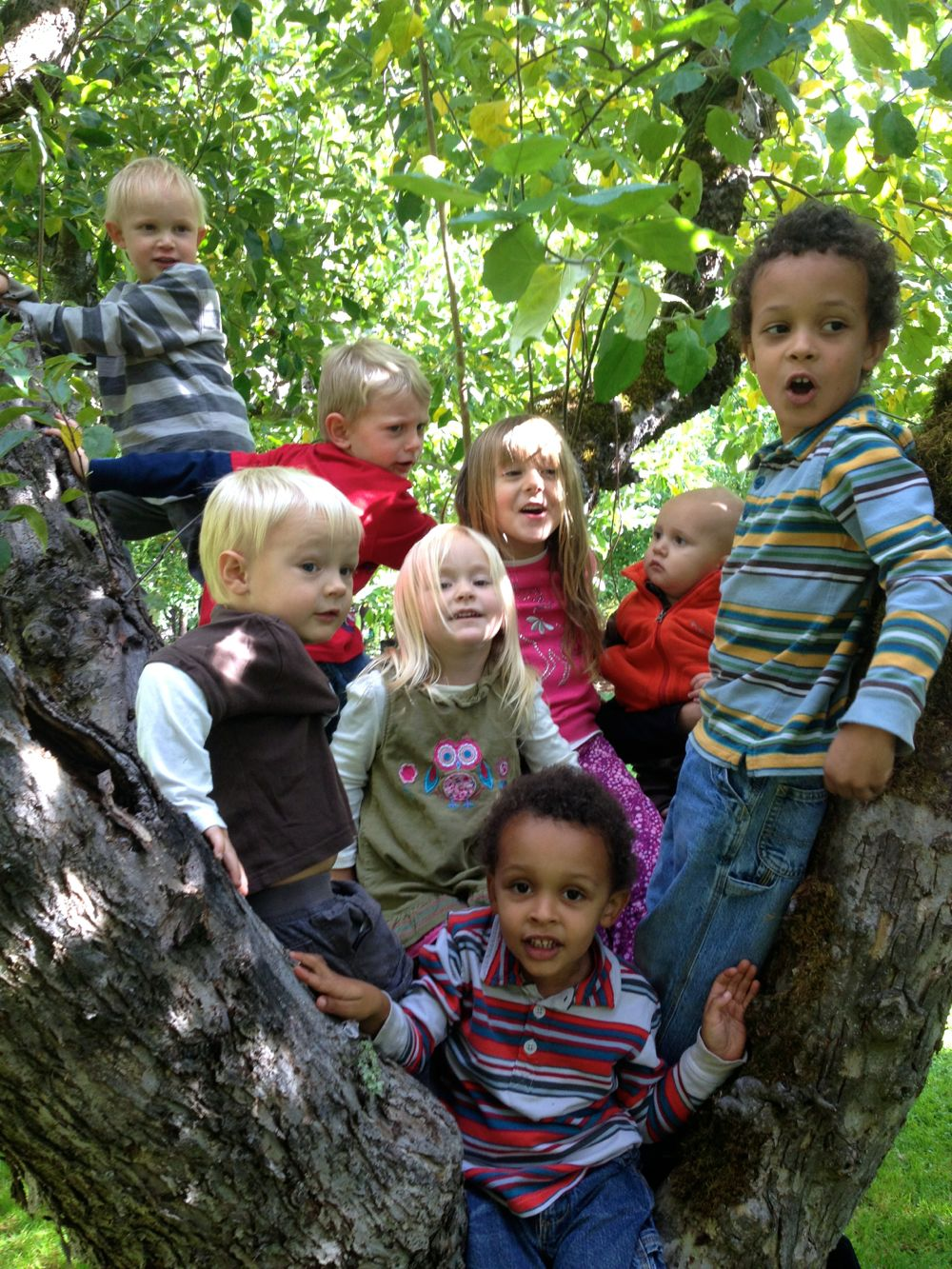 kids in apple tree