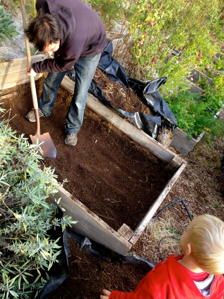 dig out raised beds