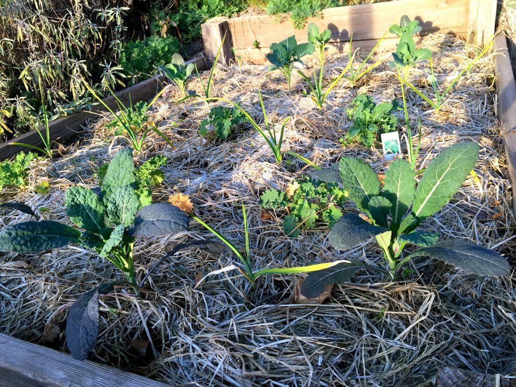 drought tolerant beds