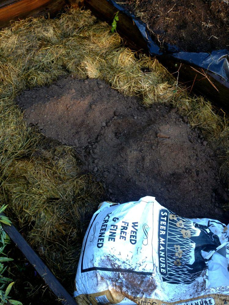 steer manure layer