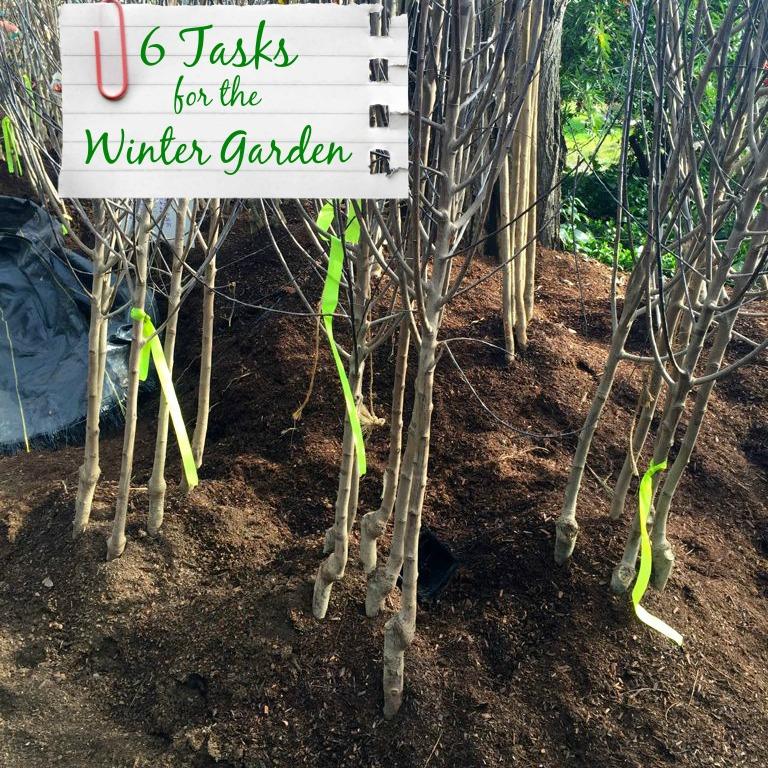 6 Essential Tasks for the Winter Garden