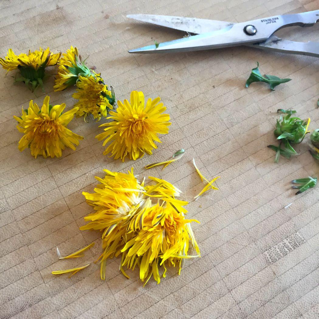 snip dandelion petals