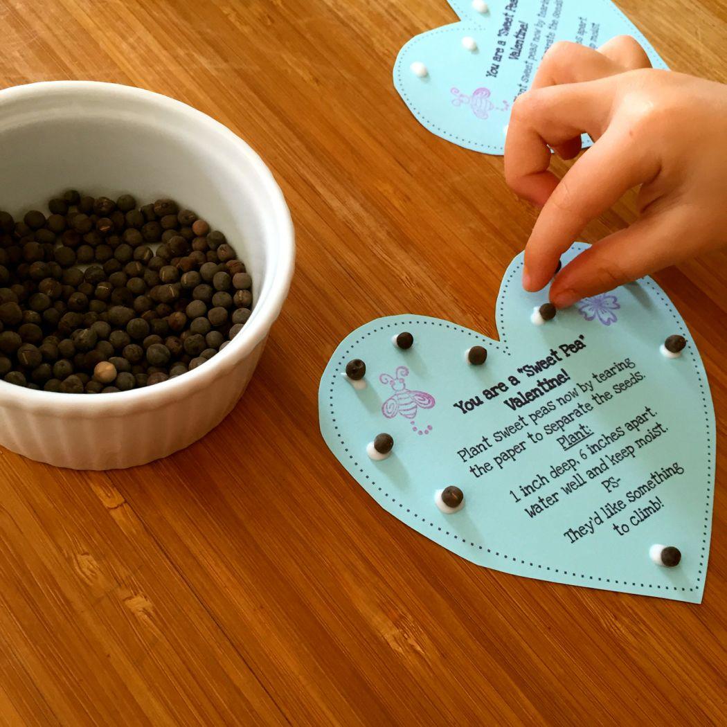 sweet pea valentine glue