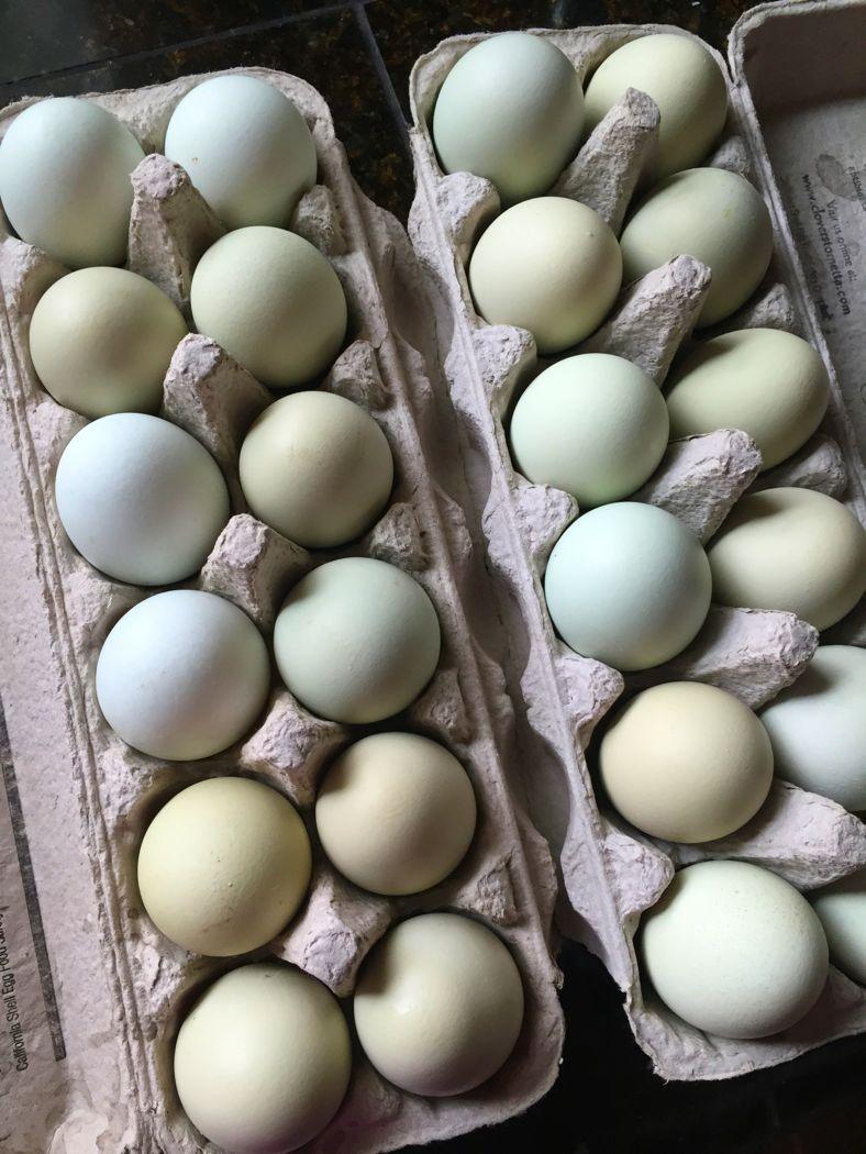 eggs for boiling