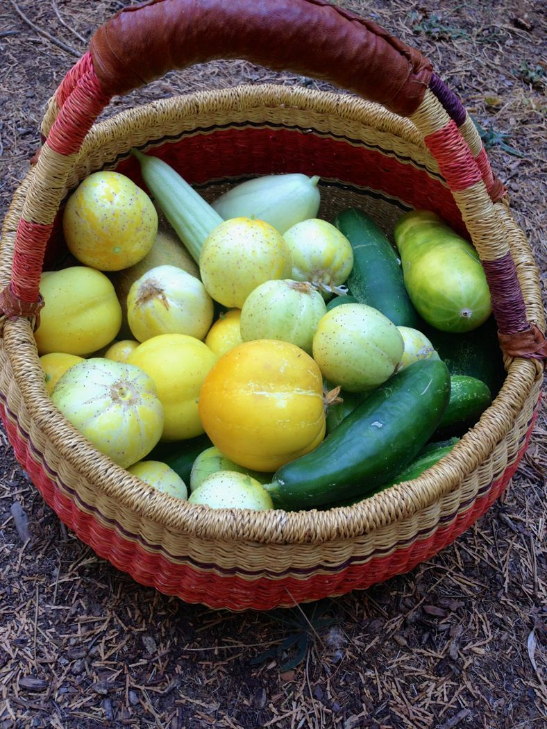 basket of cucumbers