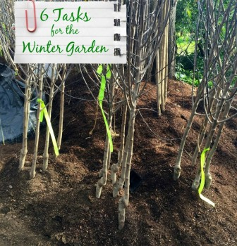 6 Essential Tasks for the Winter Garden