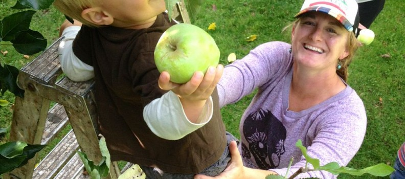 Apple Picking at the Albo's