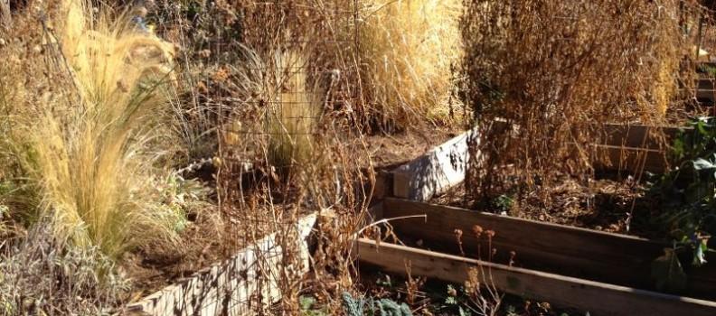 Winter Garden Clean-up