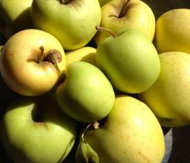 Applesauce Canning Class