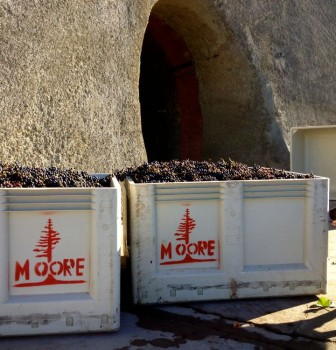 Moore Family Winery Crush '14
