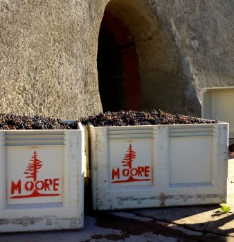 Moore Family Winery Crush '14
