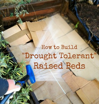 Drought Tolerant Raised Beds
