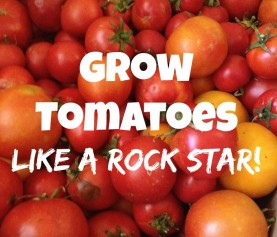 How to Plant Tomatoes Like a Rock Star!